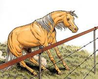 how to build a good horse fence